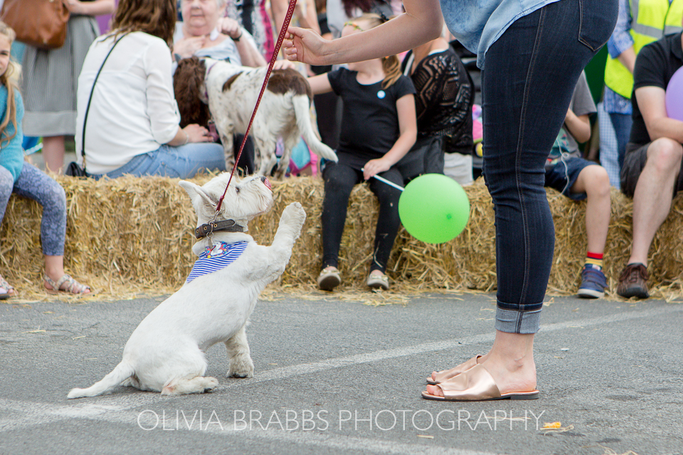bishy road street party 2017 and bishy barkers dog show
