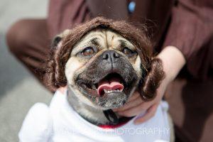 princess leia star wars dog bishy road street party 2017 and bishy barkers dog show
